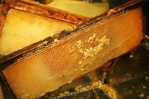 health benefits of raw honey.jpg